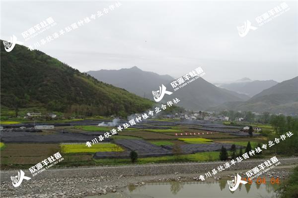 浙江优质食用菌羊肚菌种植基地