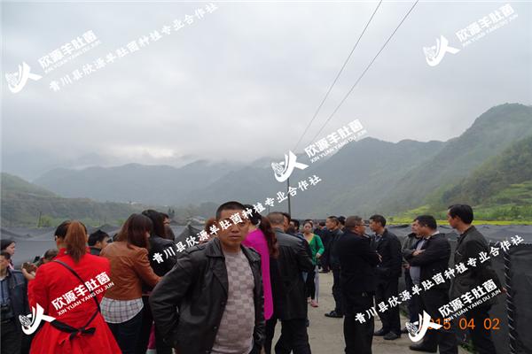 西藏正宗羊肚菌培育种植技术