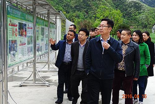 刘志强县长参观羊肚菌基地